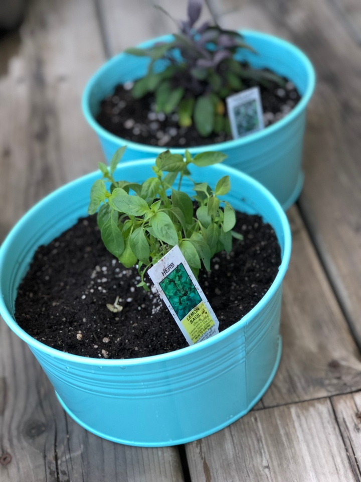 How To : City Herb Garden